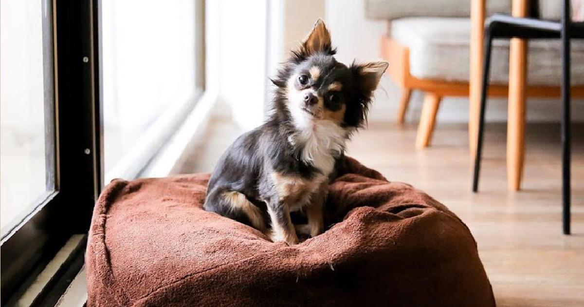 ペット の おうち 子犬